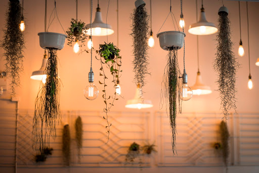 decorative ceiling with plants and lighting